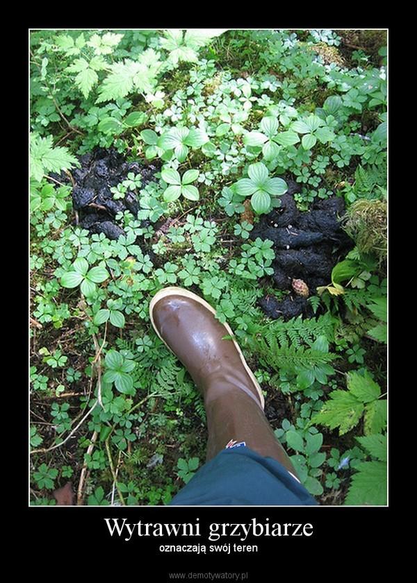 Wytrawni grzybiarze – oznaczają swój teren