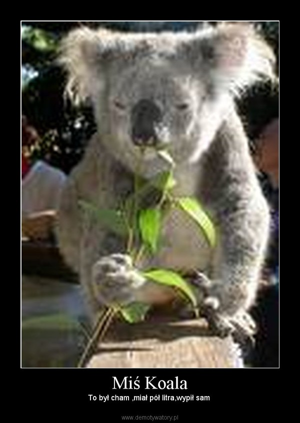 Miś Koala – To był cham ,miał pół litra,wypił sam