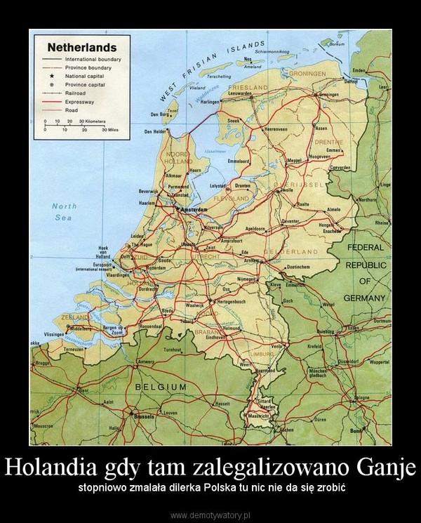 Holandia gdy tam zalegalizowano Ganje –  stopniowo zmalała dilerka Polska tu nic nie da się zrobić