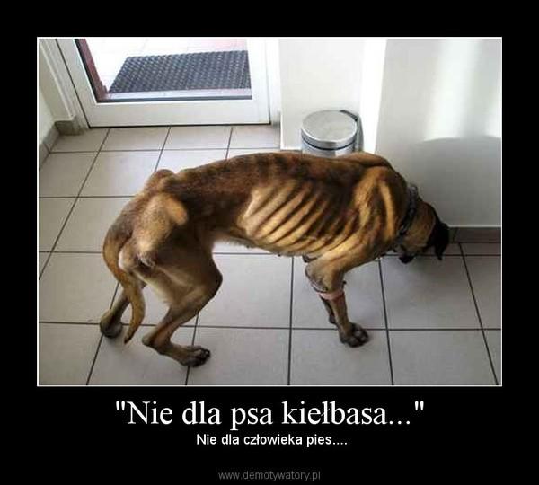 """""""Nie dla psa kiełbasa..."""" –  Nie dla człowieka pies...."""