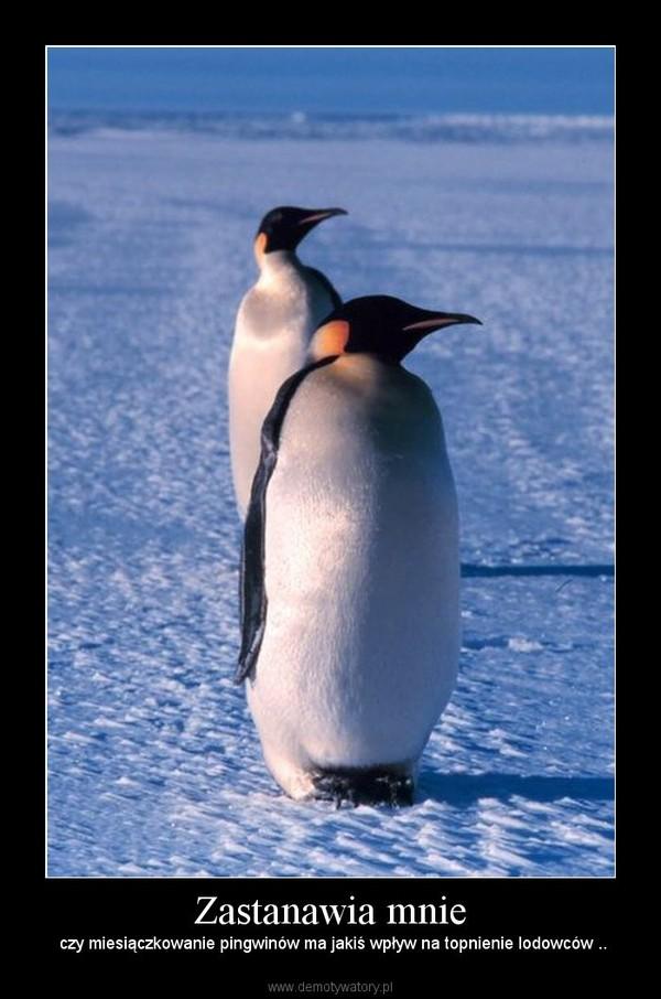 Zastanawia mnie –  czy miesiączkowanie pingwinów ma jakiś wpływ na topnienie lodowców ..