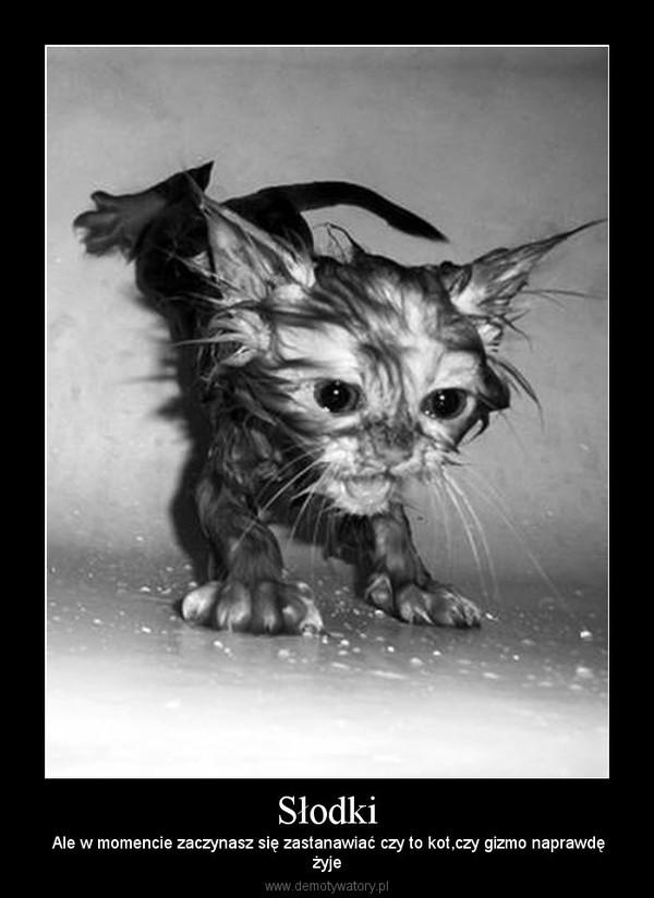 Słodki –  Ale w momencie zaczynasz się zastanawiać czy to kot,czy gizmo naprawdężyje