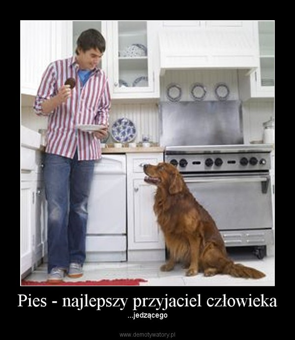 Pies - najlepszy przyjaciel człowieka – ...jedzącego