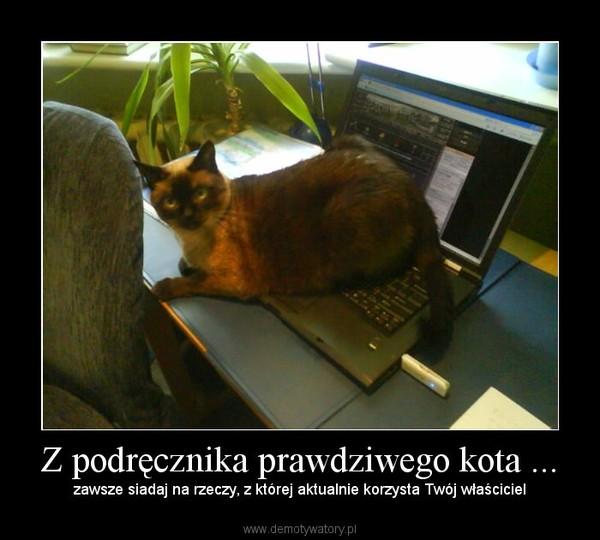 jest kotem i kotem w prawdziwym życiu