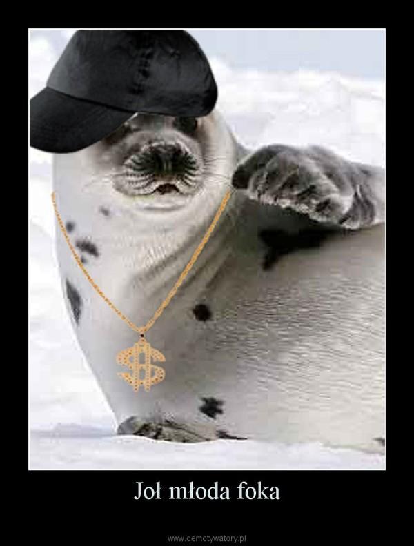 Joł młoda foka –