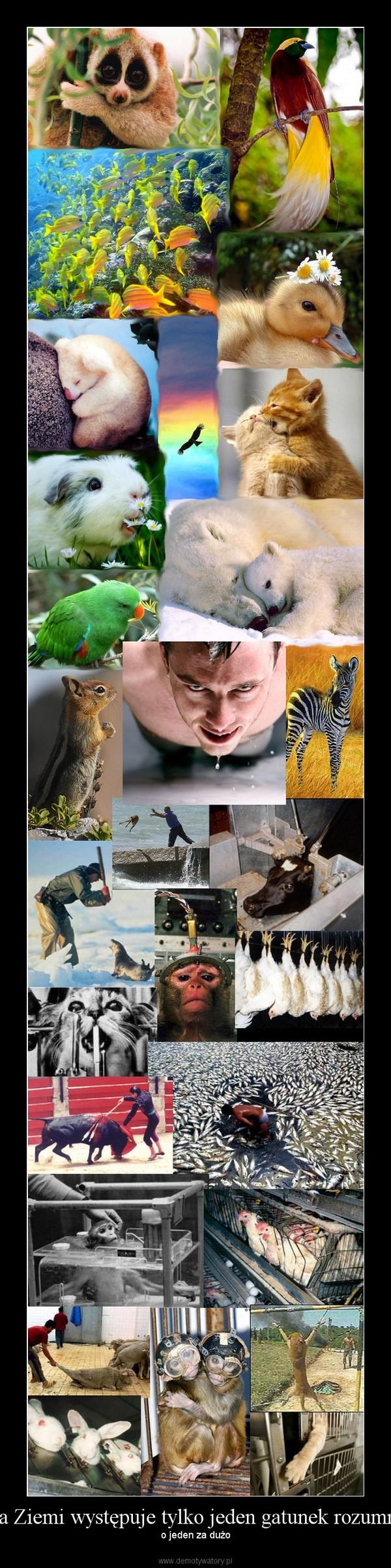 Na Ziemi występuje tylko jeden gatunek rozumny – o jeden za dużo