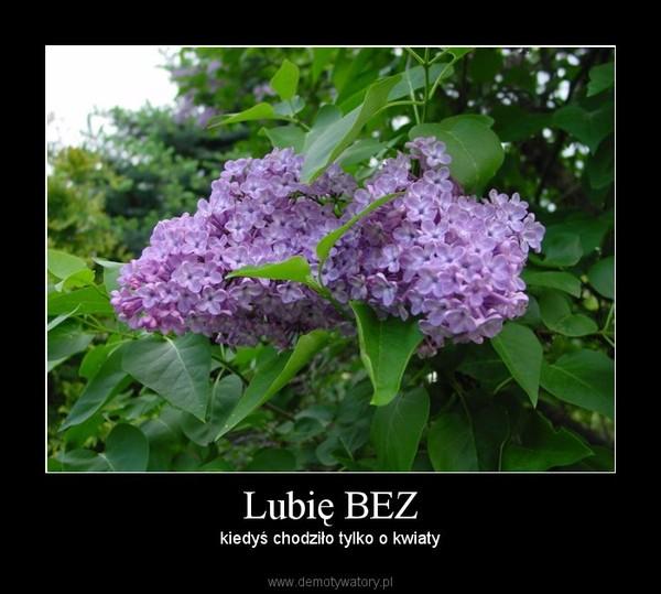 Lubię BEZ – kiedyś chodziło tylko o kwiaty