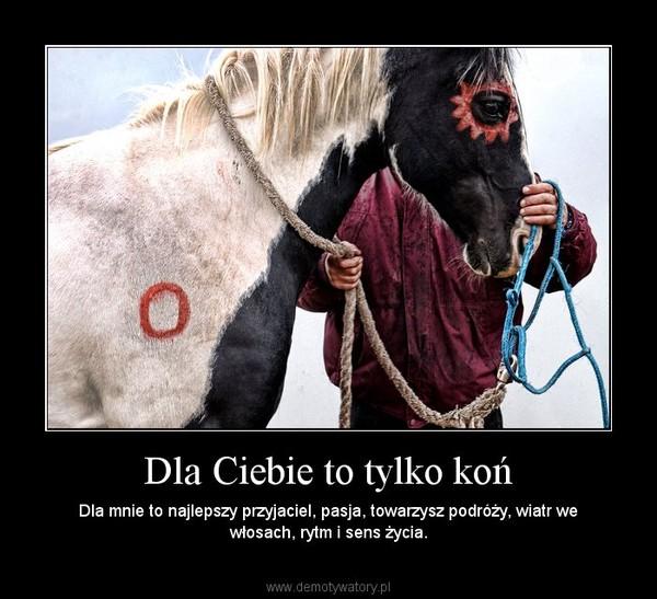 Dla Ciebie to tylko koń – Dla mnie to najlepszy przyjaciel, pasja, towarzysz podróży, wiatr we włosach, rytm i sens życia.