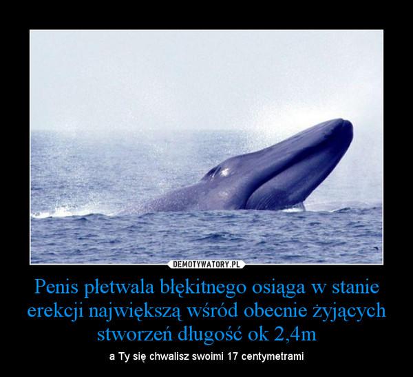 Penis płetwala błękitnego osiąga w stanie erekcji największą wśród obecnie żyjących stworzeń długość ok 2,4m – a Ty się chwalisz swoimi 17 centymetrami
