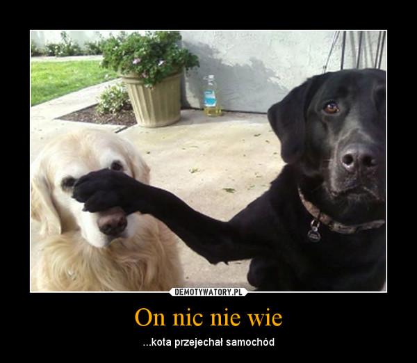 On nic nie wie – ...kota przejechał samochód