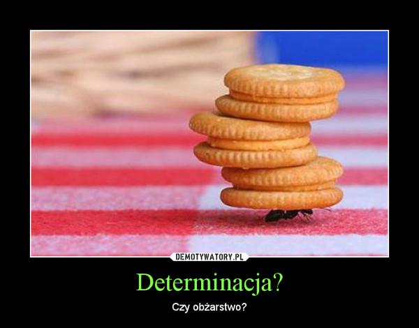 Determinacja? – Czy obżarstwo?