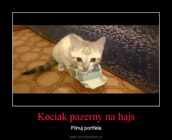 Kociak pazerny na hajs – Pilnuj portfela