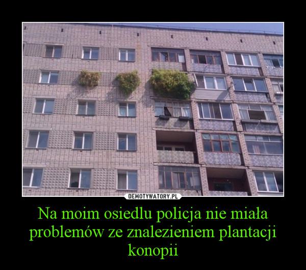 Na moim osiedlu policja nie miała problemów ze znalezieniem plantacji konopii –
