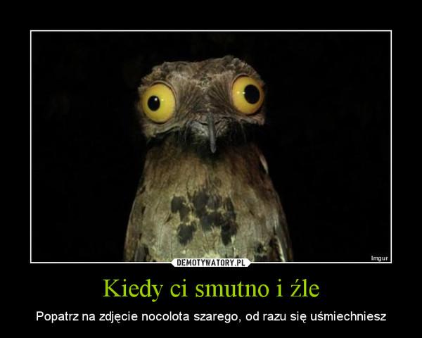 Kiedy ci smutno i źle – Popatrz na zdjęcie nocolota szarego, od razu się uśmiechniesz