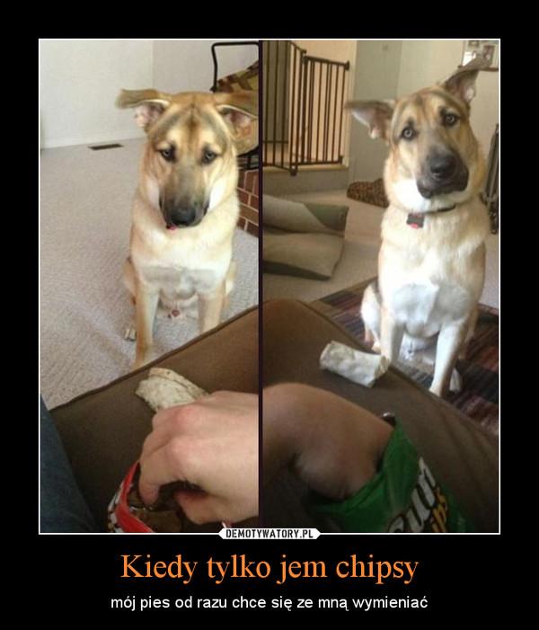 Kiedy tylko jem chipsy – mój pies od razu chce się ze mną wymieniać