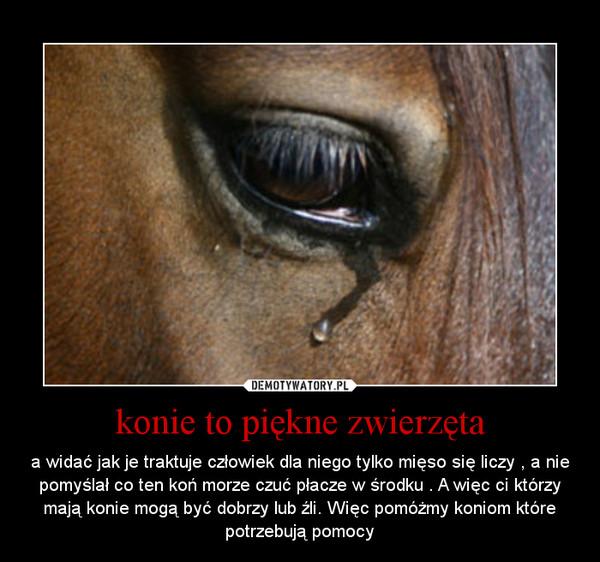 Konie To Piękne Zwierzęta Demotywatorypl