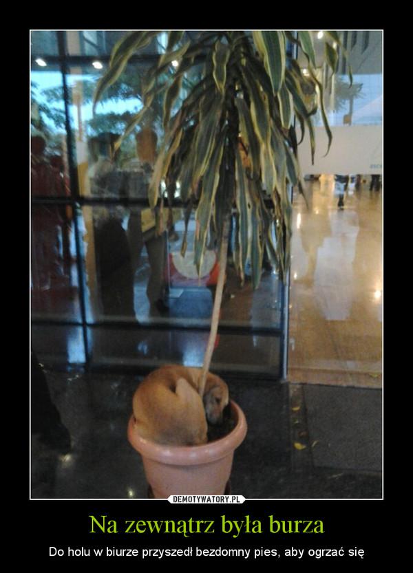 Na zewnątrz była burza – Do holu w biurze przyszedł bezdomny pies, aby ogrzać się