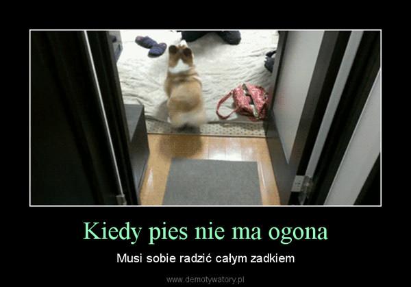 Kiedy pies nie ma ogona – Musi sobie radzić całym zadkiem
