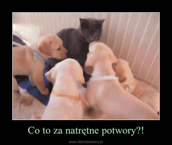 Co to za natrętne potwory?! –