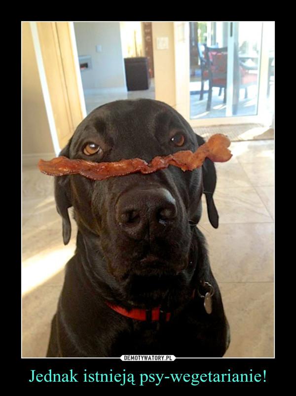 Jednak istnieją psy-wegetarianie! –