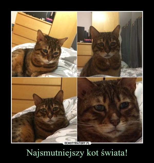 Najsmutniejszy kot świata! –