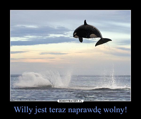 Willy jest teraz naprawdę wolny! –
