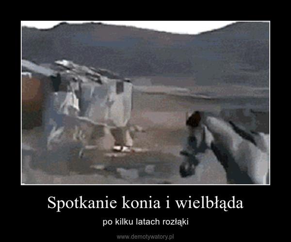 Spotkanie konia i wielbłąda – po kilku latach rozłąki