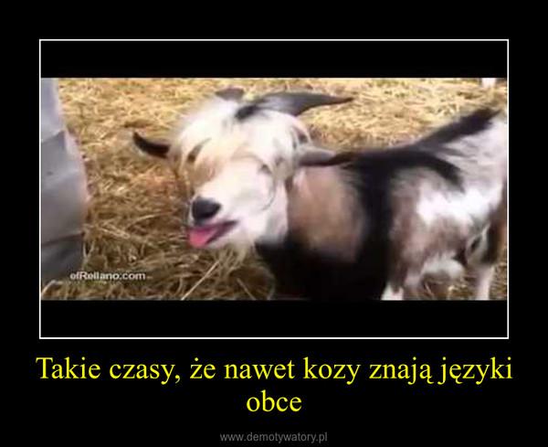 Takie czasy, że nawet kozy znają języki obce –