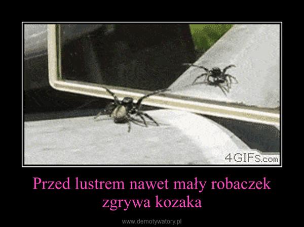 Przed lustrem nawet mały robaczek zgrywa kozaka –