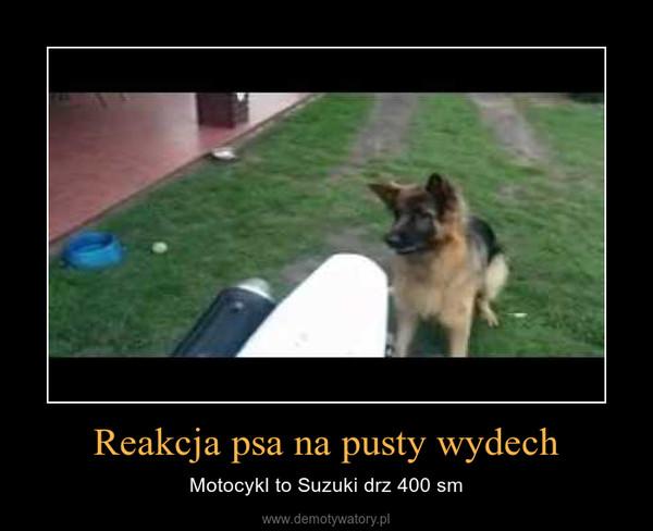 Reakcja psa na pusty wydech – Motocykl to Suzuki drz 400 sm