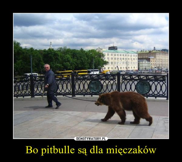 Bo pitbulle są dla mięczaków –