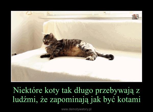 Niektóre koty tak długo przebywają z ludźmi, że zapominają jak być kotami –