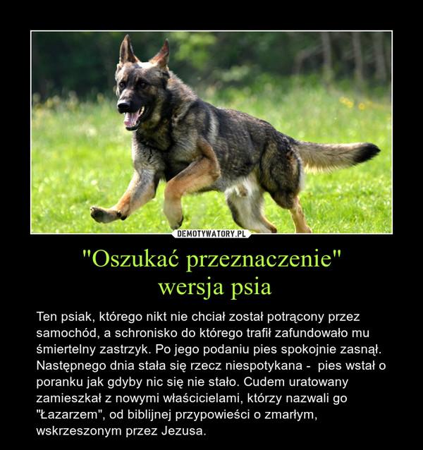 """""""Oszukać przeznaczenie"""" wersja psia – Ten psiak, którego nikt nie chciał został potrącony przez samochód, a schronisko do którego trafił zafundowało mu śmiertelny zastrzyk. Po jego podaniu pies spokojnie zasnął.Następnego dnia stała się rzecz niespotykana -  pies wstał o poranku jak gdyby nic się nie stało. Cudem uratowany zamieszkał z nowymi właścicielami, którzy nazwali go """"Łazarzem"""", od biblijnej przypowieści o zmarłym, wskrzeszonym przez Jezusa."""