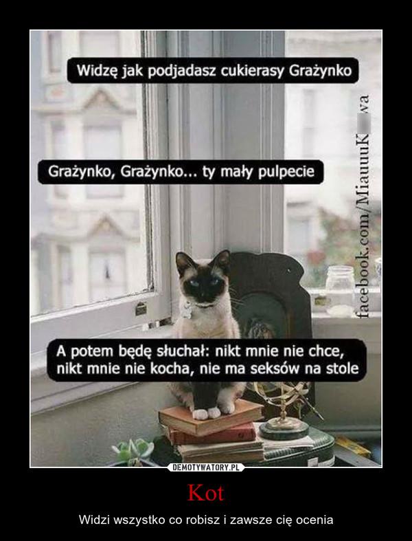 Kot – Widzi wszystko co robisz i zawsze cię ocenia