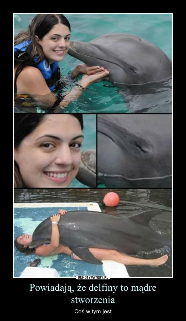Powiadają, że delfiny to mądre stworzenia – Coś w tym jest