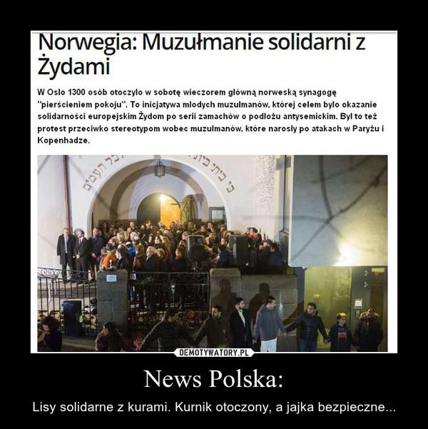 News Polska: – Lisy solidarne z kurami. Kurnik otoczony, a jajka bezpieczne...