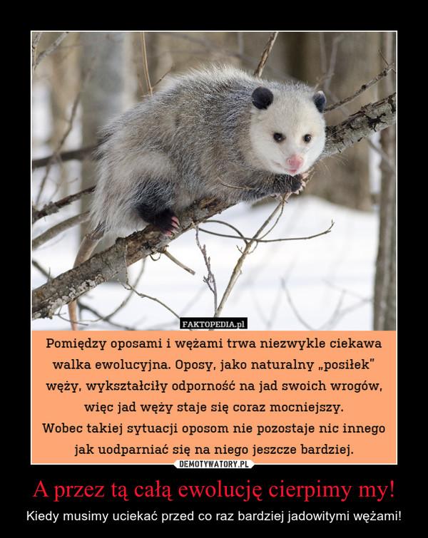 A przez tą całą ewolucję cierpimy my! – Kiedy musimy uciekać przed co raz bardziej jadowitymi wężami!