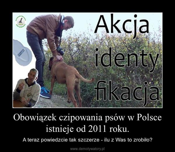 Obowiązek czipowania psów w Polsce istnieje od 2011 roku. – A teraz powiedzcie tak szczerze - ilu z Was to zrobiło?