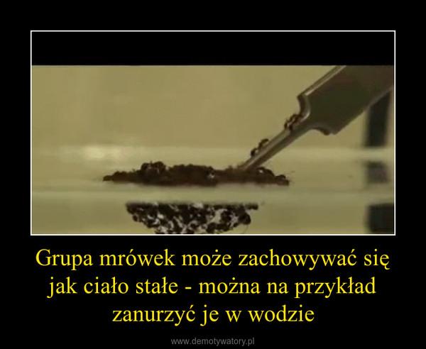 Grupa mrówek może zachowywać się jak ciało stałe - można na przykład zanurzyć je w wodzie –