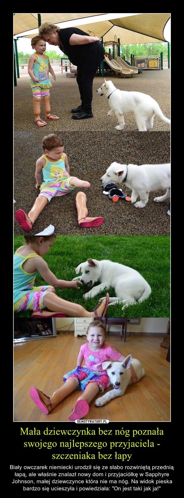 """Mała dziewczynka bez nóg poznała swojego najlepszego przyjaciela - szczeniaka bez łapy – Biały owczarek niemiecki urodził się ze słabo rozwiniętą przednią łapą, ale właśnie znalazł nowy dom i przyjaciółkę w Sapphyre Johnson, małej dziewczynce która nie ma nóg. Na widok pieska bardzo się ucieszyła i powiedziała: """"On jest taki jak ja!"""""""