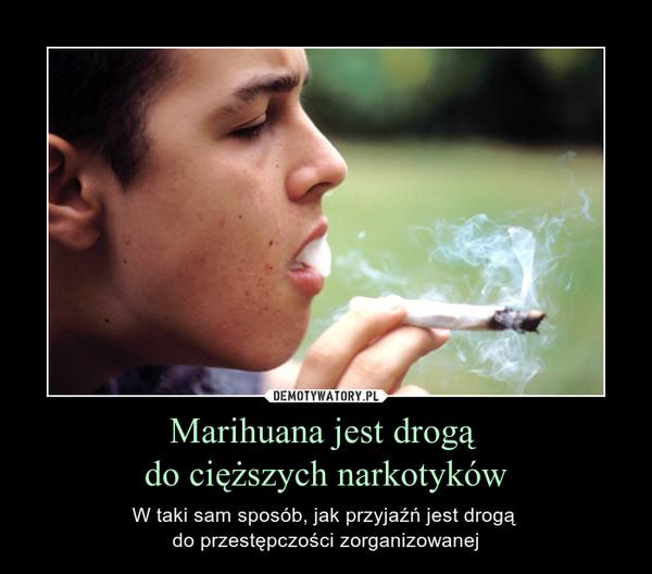 Marihuana jest drogą do cięższych narkotyków – W taki sam sposób, jak przyjaźń jest drogą do przestępczości zorganizowanej