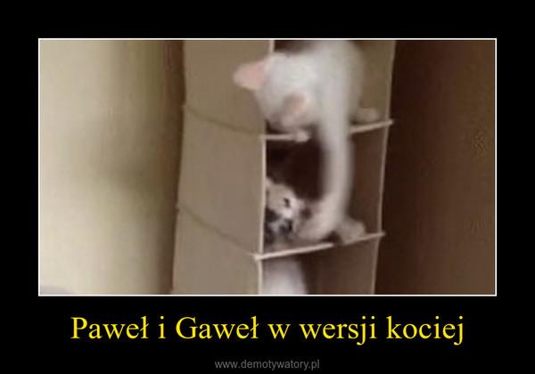 Paweł i Gaweł w wersji kociej –