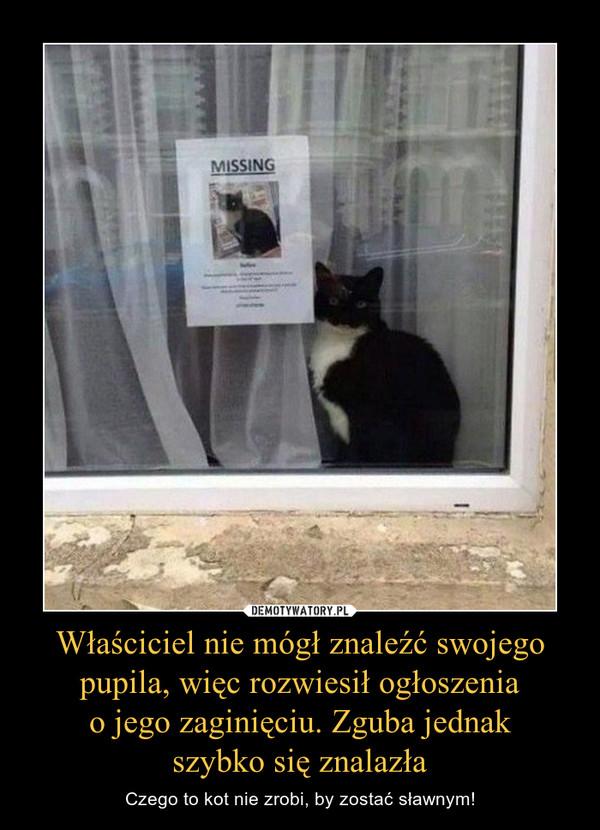 Właściciel nie mógł znaleźć swojego pupila, więc rozwiesił ogłoszenia o jego zaginięciu. Zguba jednak szybko się znalazła – Czego to kot nie zrobi, by zostać sławnym!