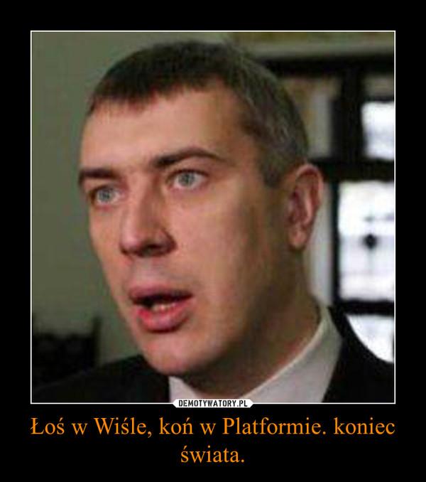 Łoś w Wiśle, koń w Platformie. koniec świata. –