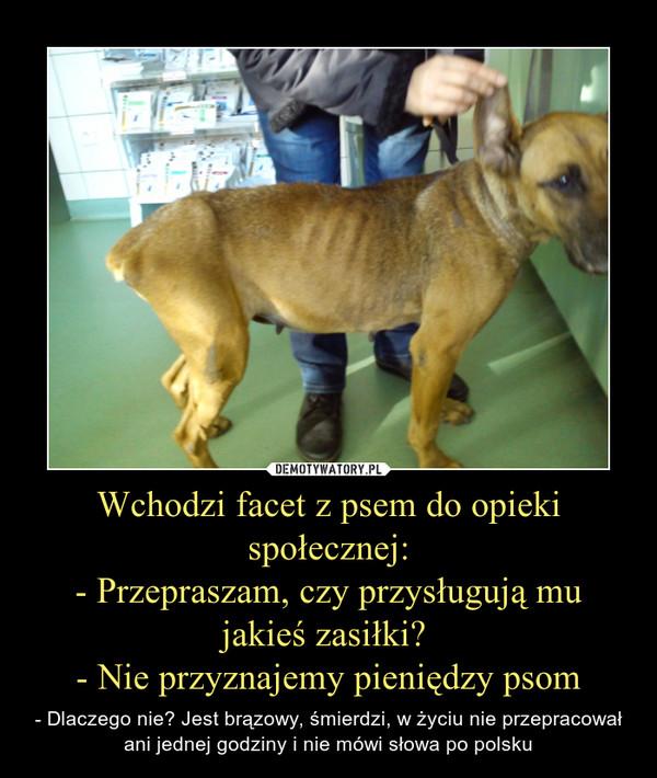 Wchodzi facet z psem do opieki społecznej:- Przepraszam, czy przysługują mu jakieś zasiłki? - Nie przyznajemy pieniędzy psom – - Dlaczego nie? Jest brązowy, śmierdzi, w życiu nie przepracował ani jednej godziny i nie mówi słowa po polsku