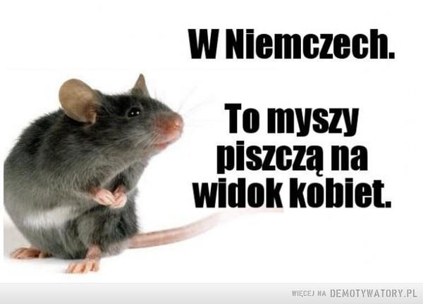 Niemieckie myszy –