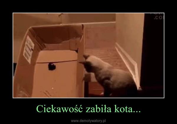 Ciekawość zabiła kota... –