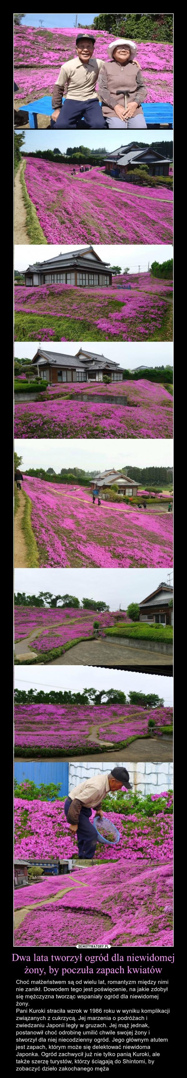 Dwa lata tworzył ogród dla niewidomej żony, by poczuła zapach kwiatów – Choć małżeństwem są od wielu lat, romantyzm między nimi nie zanikł. Dowodem tego jest poświęcenie, na jakie zdobył się mężczyzna tworząc wspaniały ogród dla niewidomej żony.Pani Kuroki straciła wzrok w 1986 roku w wyniku komplikacji związanych z cukrzycą. Jej marzenia o podróżach i zwiedzaniu Japonii legły w gruzach. Jej mąż jednak, postanowił choć odrobinę umilić chwile swojej żony i stworzył dla niej niecodzienny ogród. Jego głównym atutem jest zapach, którym może się delektować niewidoma Japonka. Ogród zachwycił już nie tylko panią Kuroki, ale także szerzę turystów, którzy ściągają do Shintomi, by zobaczyć dzieło zakochanego męża