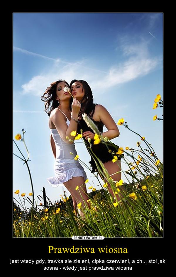 Prawdziwa wiosna – jest wtedy gdy, trawka sie zieleni, cipka czerwieni, a ch... stoi jak sosna - wtedy jest prawdziwa wiosna