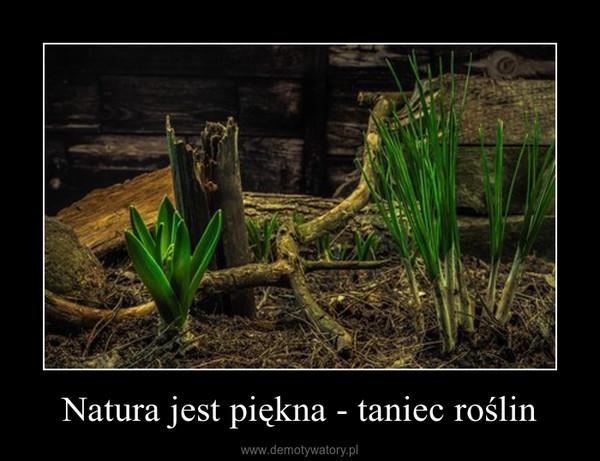 Natura jest piękna - taniec roślin –